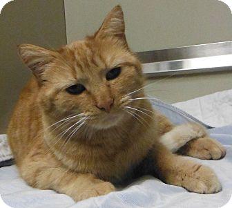 Domestic Shorthair Cat for adoption in Cedartown, Georgia - 30798027