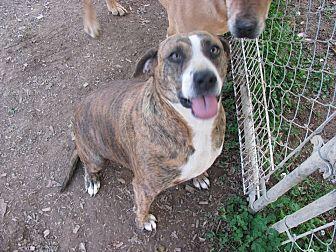 Plott Hound Mix Dog for adoption in Remlap, Alabama - Daisy