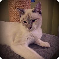 Adopt A Pet :: Alerria - Fairborn, OH