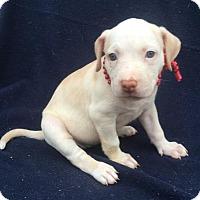Adopt A Pet :: Reese - Buffalo, NY