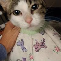 Adopt A Pet :: Rose - Winona, MN