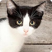 Adopt A Pet :: BRUCE - Pt. Richmond, CA