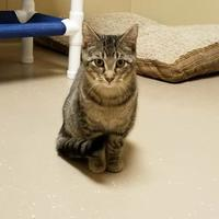 Adopt A Pet :: Willem - Wisconsin Rapids, WI