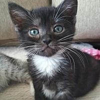 Adopt A Pet :: Drake - Chandler, AZ