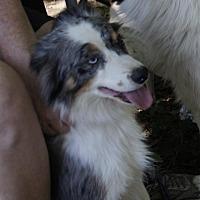 Adopt A Pet :: ~Macey - Little Rock, AR