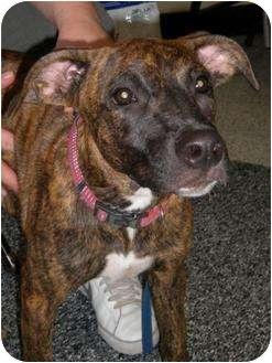 Plott Hound Mix Dog for adoption in Humble, Texas - Missy