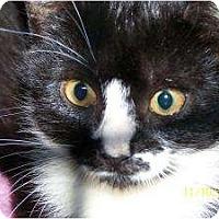 Adopt A Pet :: Abby - Riverside, RI