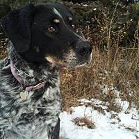 Adopt A Pet :: Donner - New Richmond,, WI