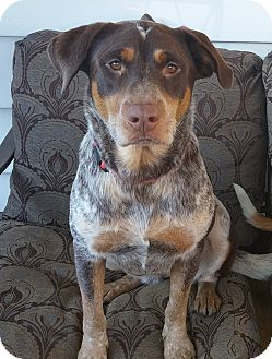 Pointer Mix Dog for adoption in New Oxford, Pennsylvania - Abbie