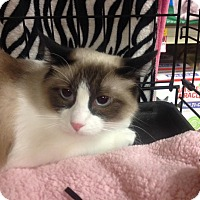 Adopt A Pet :: Champagne - College Station, TX