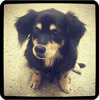 Dachshund Mix Dog for adoption in Grand Bay, Alabama - Malcom