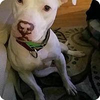 Adopt A Pet :: Edith - Villa Park, IL