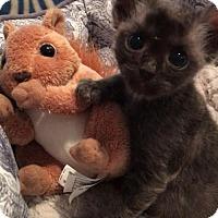 Adopt A Pet :: Frank - Los Angeles, CA