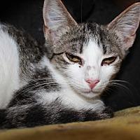Adopt A Pet :: Sly - Cuero, TX