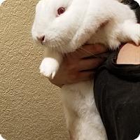 Florida White Mix for adoption in West Palm Beach, Florida - Gracie