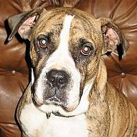 Adopt A Pet :: Frank - Killian, LA