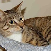 Domestic Mediumhair Cat for adoption in Upland, California - NADIA
