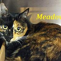 Adopt A Pet :: Meadow - El Cajon, CA