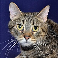 Adopt A Pet :: Nellie - Lenexa, KS