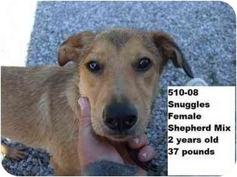 Shepherd (Unknown Type) Mix Dog for adoption in Zanesville, Ohio - Snuggles - RESCUED!