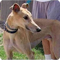 Adopt A Pet :: Hummer - Carlsbad, CA