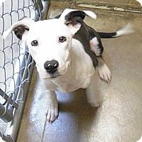 Adopt A Pet :: Sadie - Wickenburg, AZ