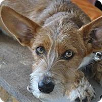 Adopt A Pet :: Odie - Brattleboro, VT