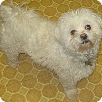 Adopt A Pet :: Prince - Mississauga, ON