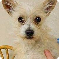 Adopt A Pet :: Peyton-ADOPTION PENDING - Boulder, CO