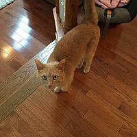 Adopt A Pet :: Othello (COURTESY POST) - Baltimore, MD