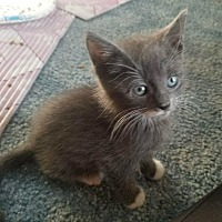 Adopt A Pet :: Juno-adoption pending - Hanna City, IL