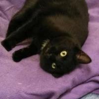 Adopt A Pet :: Bobbie - Shelbyville, KY
