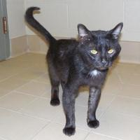 Adopt A Pet :: Blackie - Jackson, MI