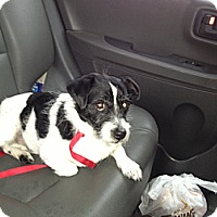Adopt A Pet :: Doug - Denver, IN