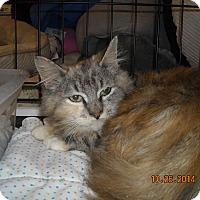 Adopt A Pet :: Mackenzie - Riverside, RI