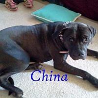 Adopt A Pet :: China - Halifax, NC