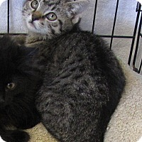 Adopt A Pet :: Crystal - bloomfield, NJ