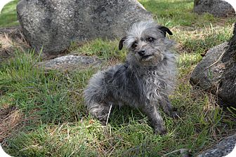 Terrier (Unknown Type, Small) Mix Dog for adoption in Mountain Center, California - Cali