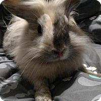 Adopt A Pet :: Three - Conshohocken, PA