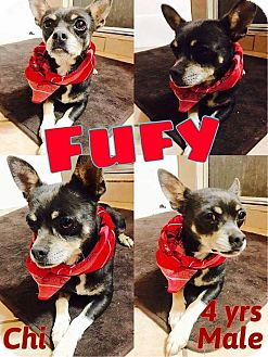 Chihuahua Mix Dog for adoption in DeForest, Wisconsin - Fufy
