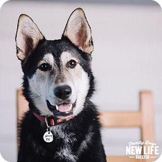 Husky Mix Dog for adoption in Portland, Oregon - Maggie