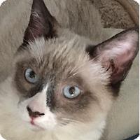 Adopt A Pet :: Ben - Santa Monica, CA