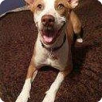 Adopt A Pet :: DOTTIE - Hampton, VA