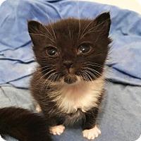 Adopt A Pet :: DALE - Flint HIll, VA