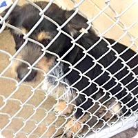 Adopt A Pet :: Einstein-ADOPTION PENDING - Boulder, CO