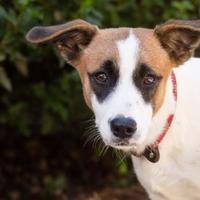 Adopt A Pet :: Tess - Madison, GA