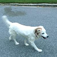 Spaniel (Unknown Type) Mix Dog for adoption in Alpharetta, Georgia - Ocean