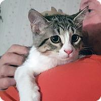Adopt A Pet :: Yvette - Mississauga, Ontario, ON