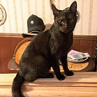 Adopt A Pet :: Ninja *No Fee 8/2 - 8/31* - Ottawa, KS