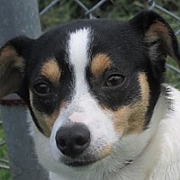 Adopt A Pet :: Marty - Germantown, MD